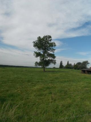 Petite promenade non loin de la France. Dscf8411