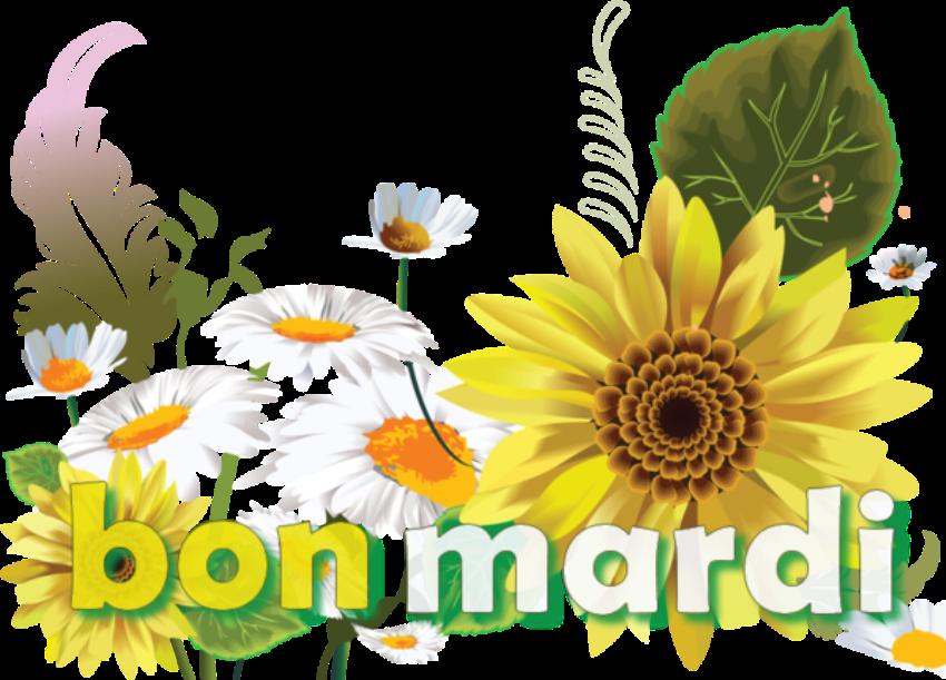Les bonjours et contacts jounaliers du Mois de Juin 2019 Mardi_10