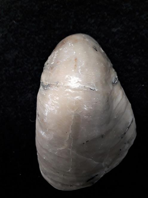 Gryphaeidae - Gryphaea dilatata Sowerby, 1816 20190715