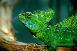 Basilisco verde 250px-19