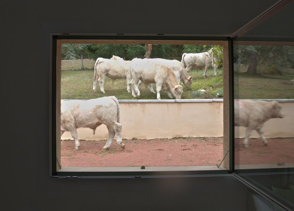 Animaux de la ferme / Chevaux - Page 35 Ks1_2111