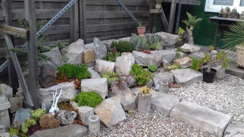 mon jardin dans les hauts de france - Page 9 20200715