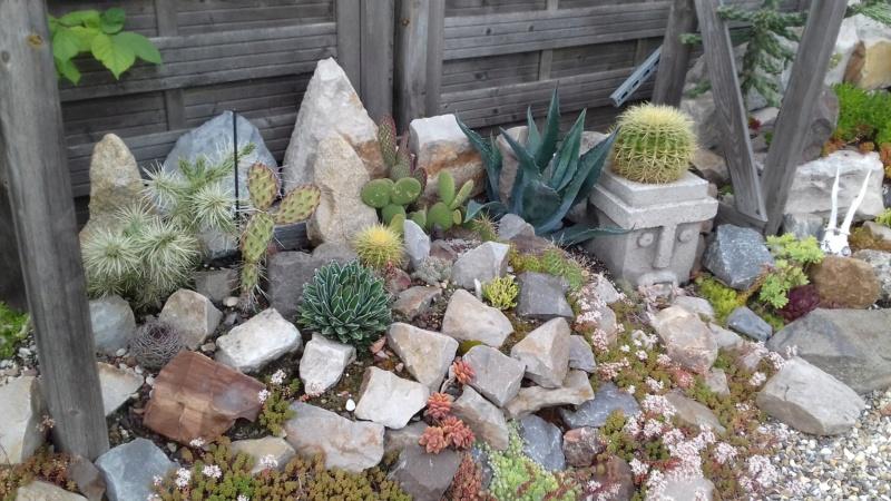 mon jardin dans les hauts de france - Page 9 20200716