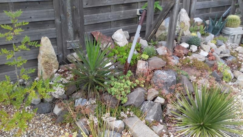 mon jardin dans les hauts de france - Page 9 20200717