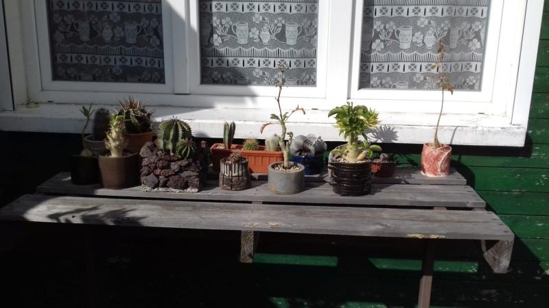 mon jardin dans les hauts de france - Page 9 20200718
