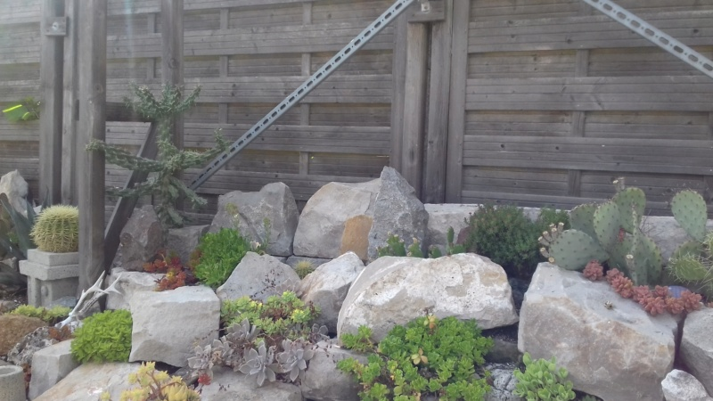mon jardin dans les hauts de france - Page 9 20200719