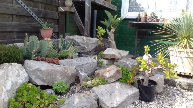 mon jardin dans les hauts de france - Page 9 20200720