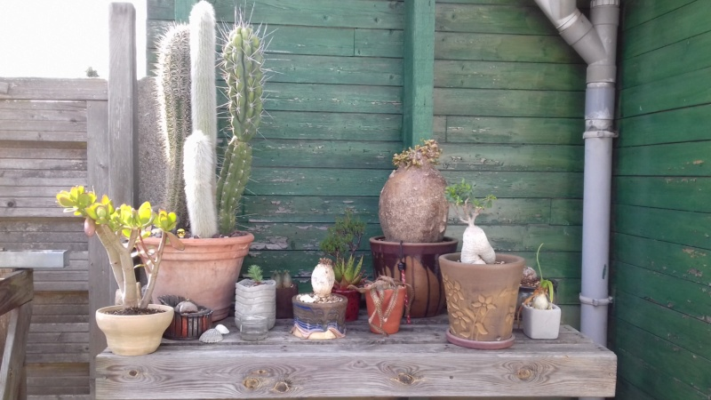 mon jardin dans les hauts de france - Page 9 20200721