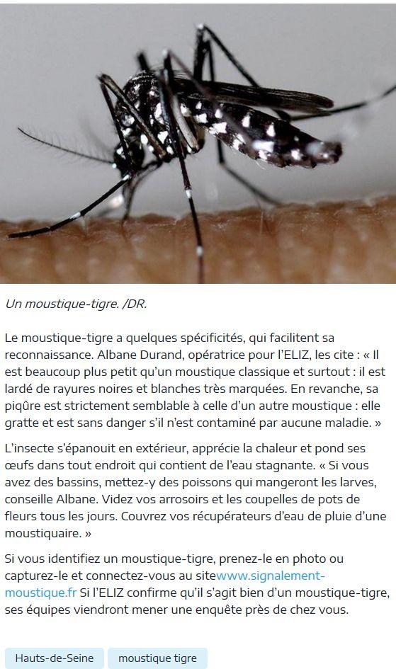 Présence de moustiques Clipb251