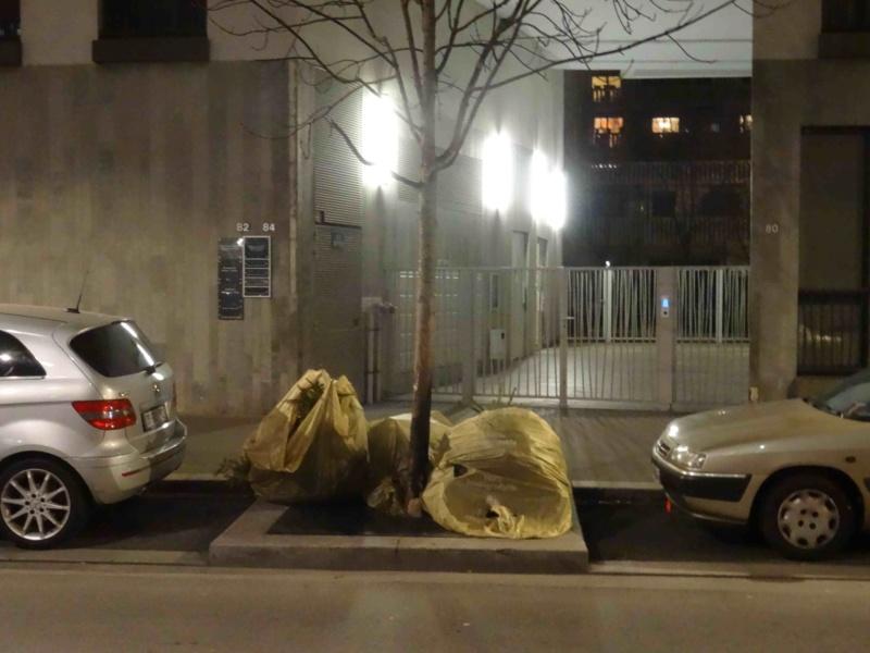 Collecte de sapins par Grand Paris Seine Ouest (GPSO) Dsc01166