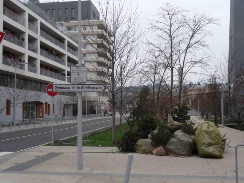 Collecte de sapins par Grand Paris Seine Ouest (GPSO) Dsc01314