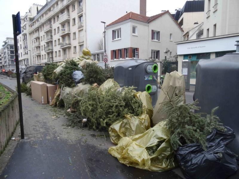 Collecte de sapins par Grand Paris Seine Ouest (GPSO) Dsc01315