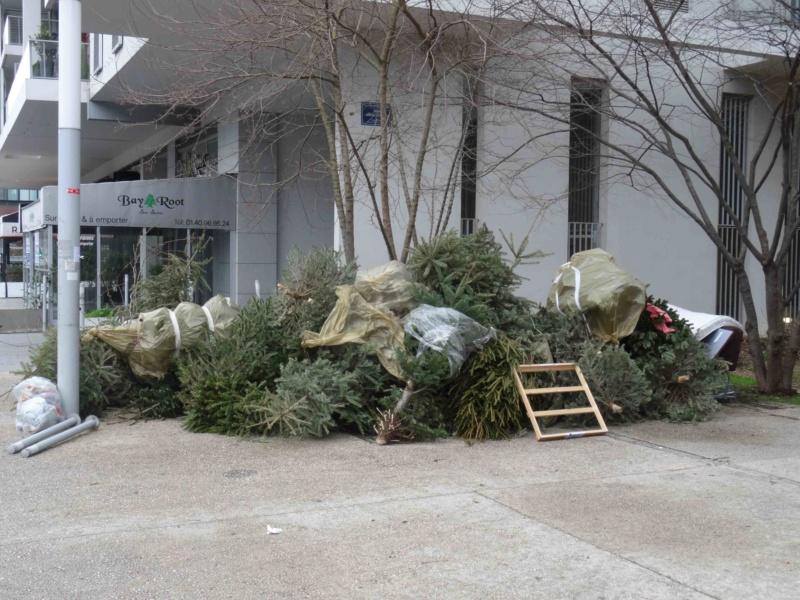Collecte de sapins par Grand Paris Seine Ouest (GPSO) Dsc01338