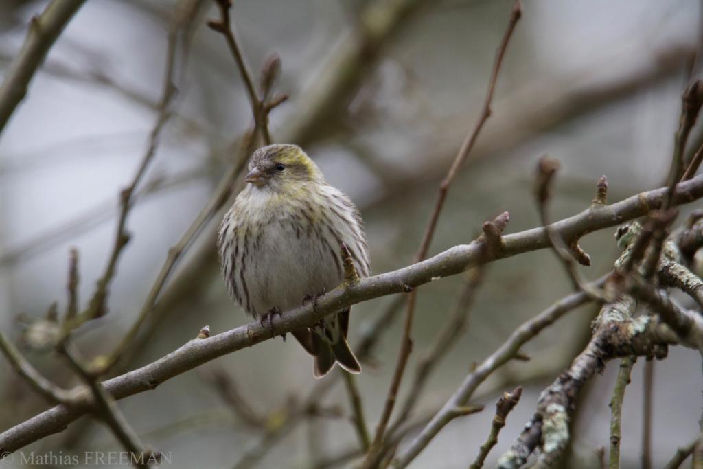 Devines le nom de l'oiseau (Europe) 02010