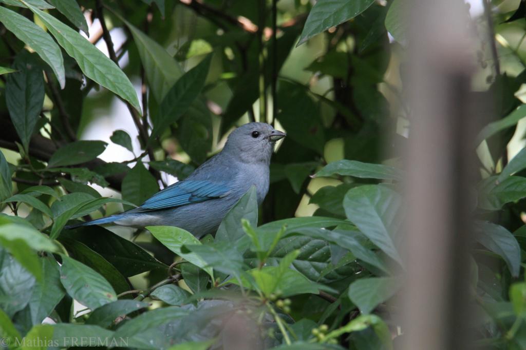 Devines le nom de l'oiseau (Monde) 127110