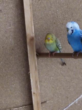 mutation olive et bleu??? Img_2023