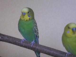 mutation olive et bleu??? Pict0010