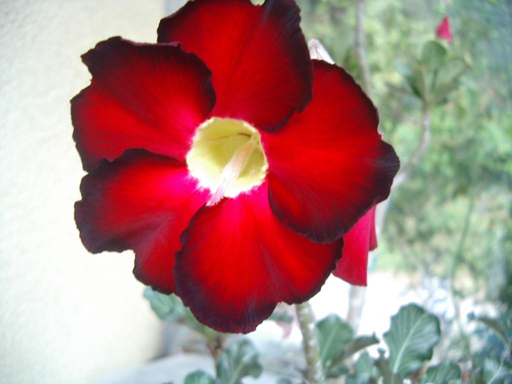 fleurs Imgp2528