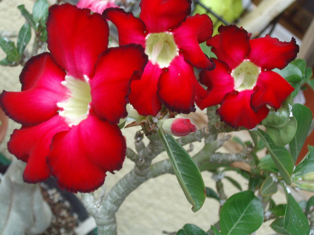fleurs Imgp2535