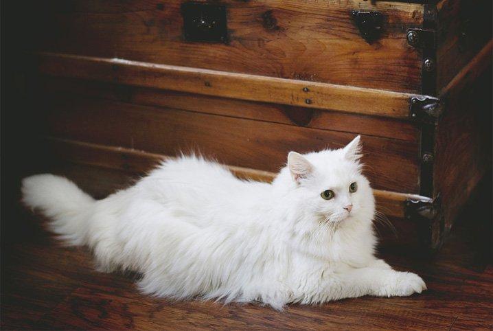 Cafofo dos Gato Gatos-10