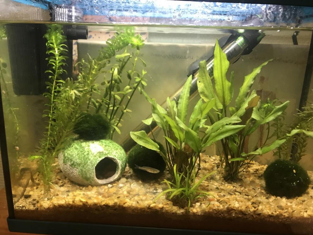 Aide aquarium 100 litres débutant Aquari10