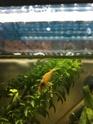Aide aquarium 100 litres débutant Oeuf10