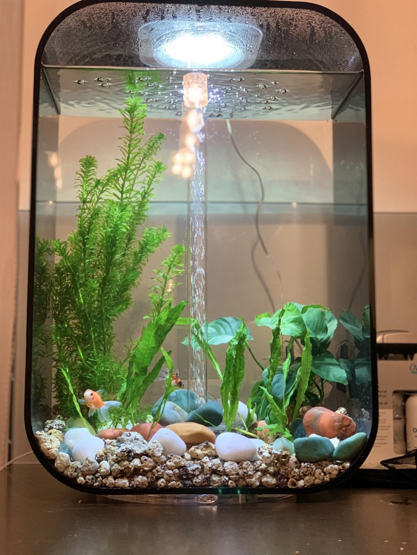 Installation / problème d'eau et mort poisson Img_3110