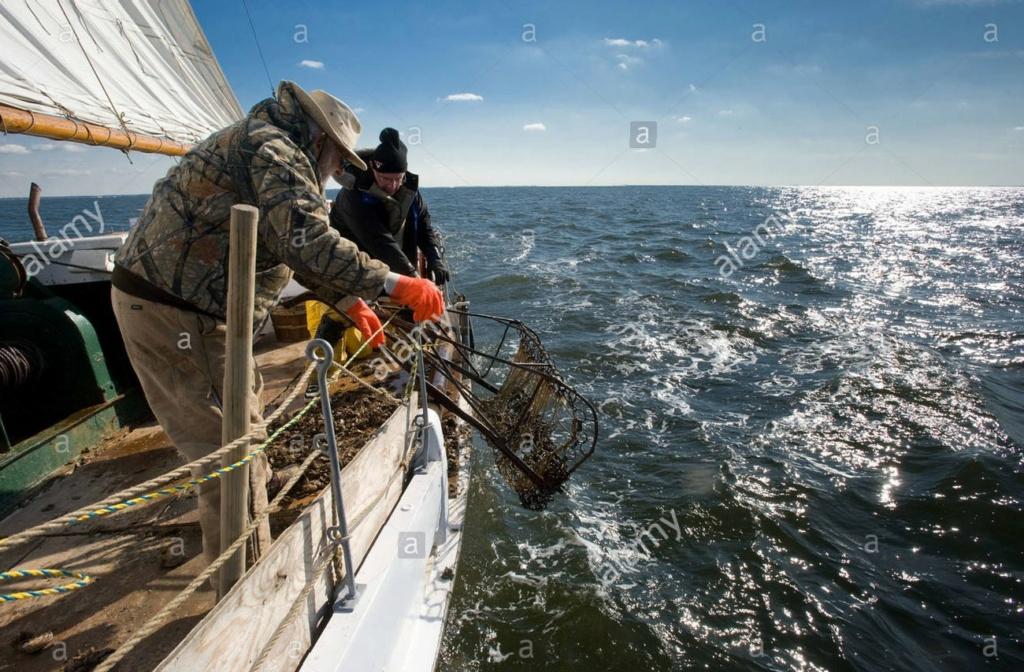 Skipjack Américain par fredo44220 Bf7wde12