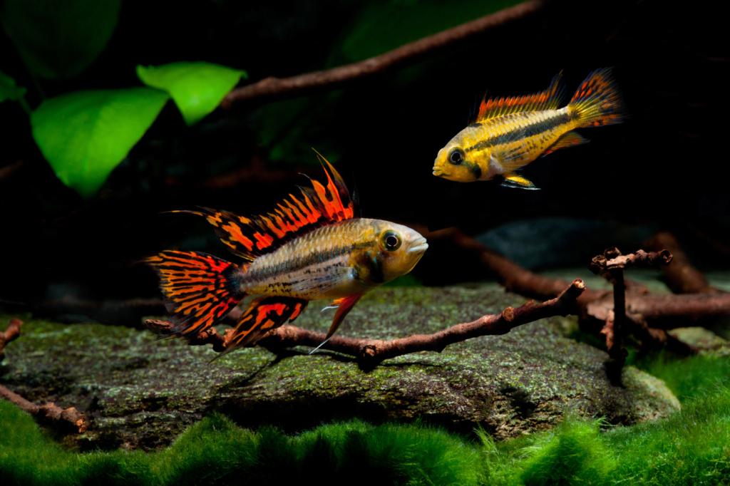 Population pour mon aquarium  16cfc410