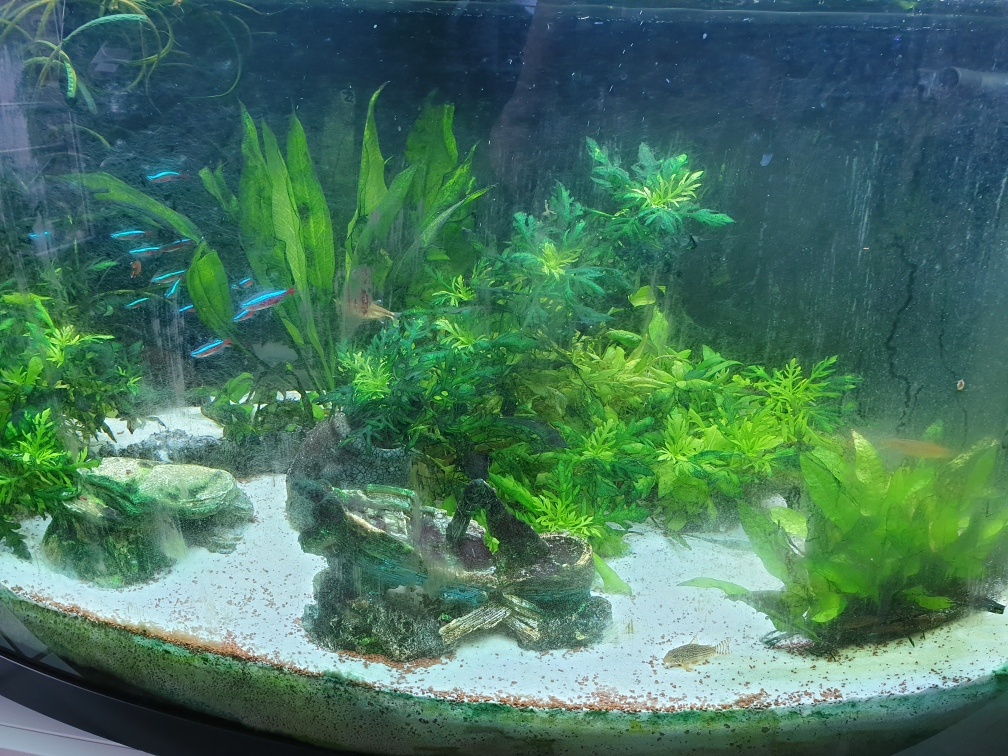 Les plantes deviennent vert foncé 96c40c10