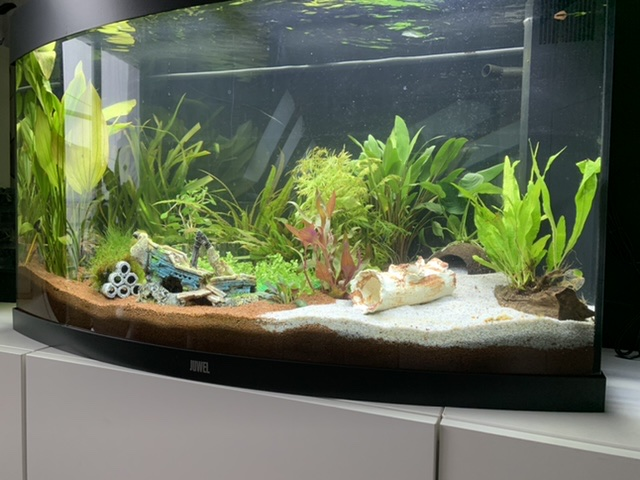 Modification de l'aquarium - Page 2 A88df810
