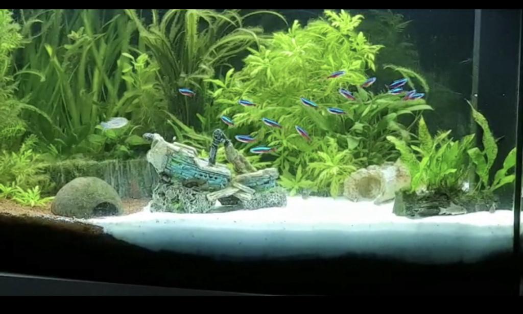 Population pour mon aquarium  Dba2c210