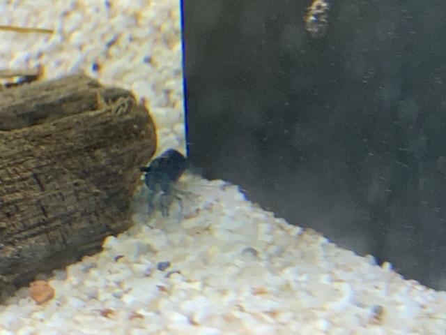 Modification de l'aquarium Ff71b710