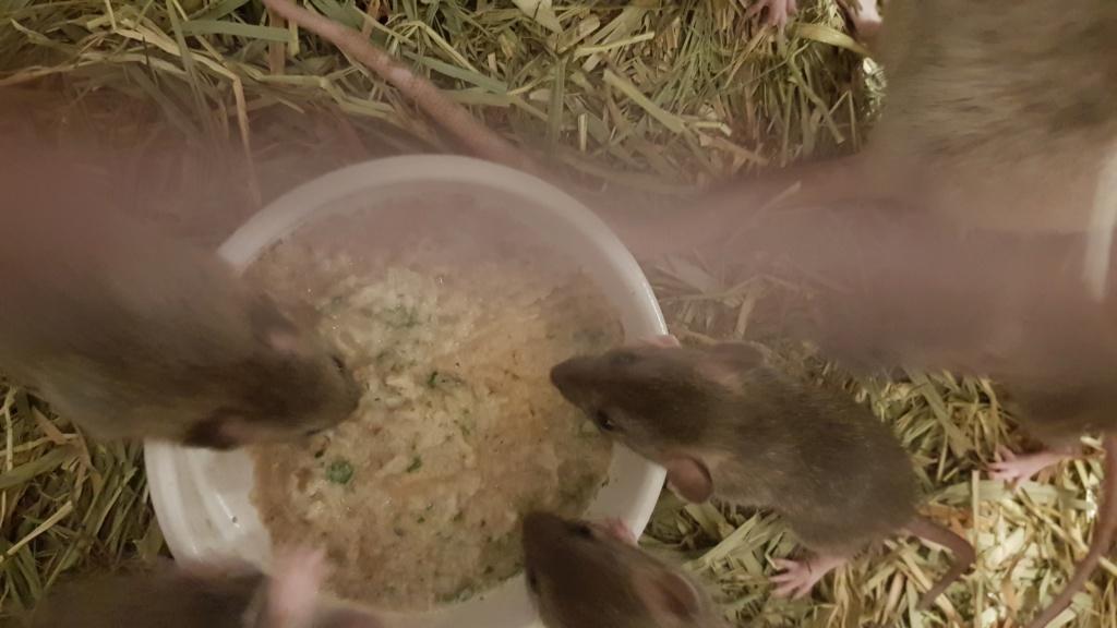 BORDEAUX et environs : Bébés semi sauvages à l'adoption!!! - Page 7 20200146