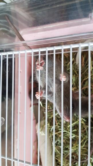 BORDEAUX et environs : Bébés semi sauvages à l'adoption!!! - Page 7 20200147