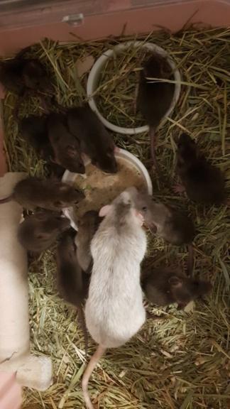 BORDEAUX et environs : Bébés semi sauvages à l'adoption!!! - Page 7 20200161
