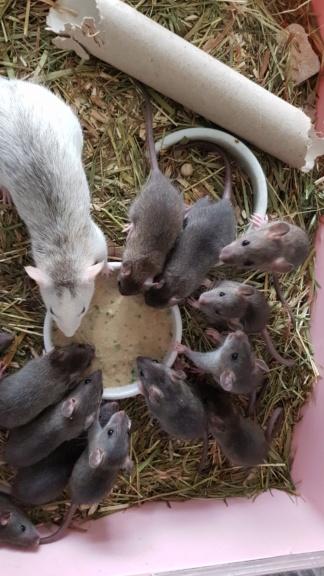 BORDEAUX et environs : Bébés semi sauvages à l'adoption!!! - Page 7 20200164