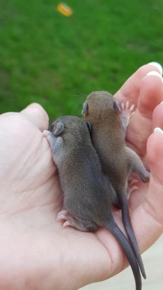 BORDEAUX et environs : Bébés semi sauvages à l'adoption!!! - Page 2 20200921