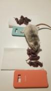 BORDEAUX et environs : Bébés semi sauvages à l'adoption!!! Sexage10