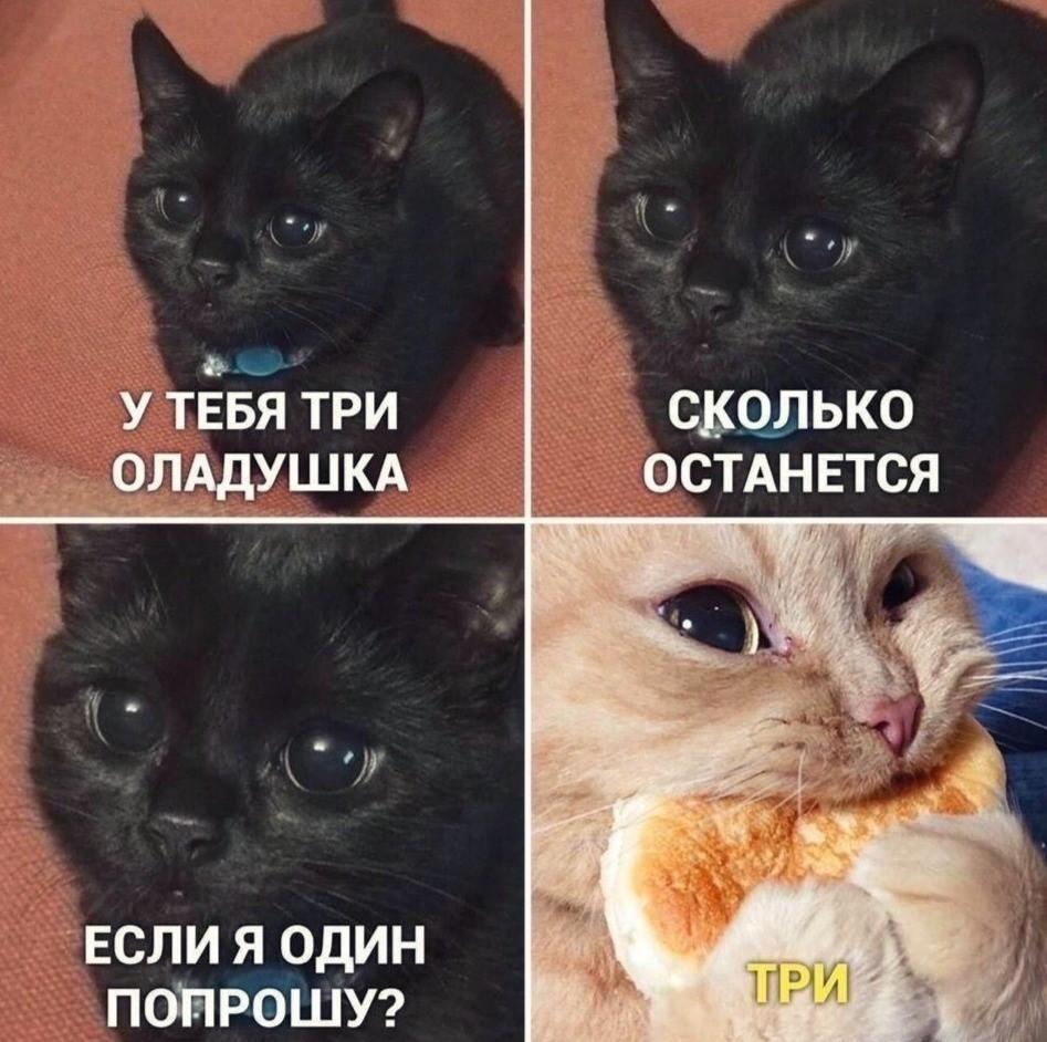Коте A_0110
