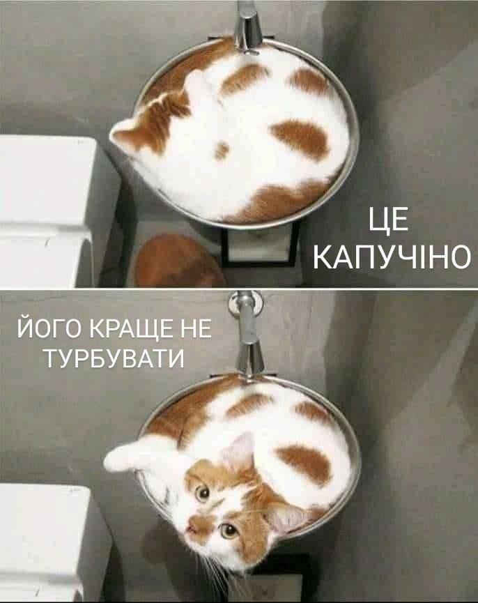 Коте A_0310
