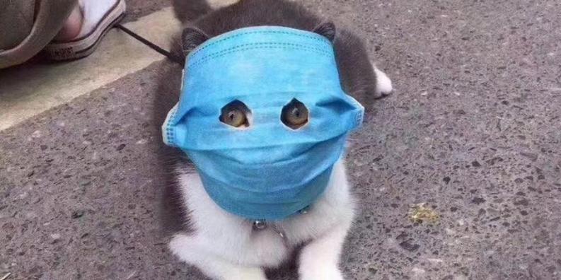 Коте A_0410