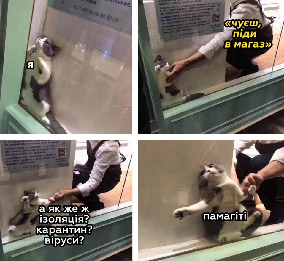 Коте A_0510