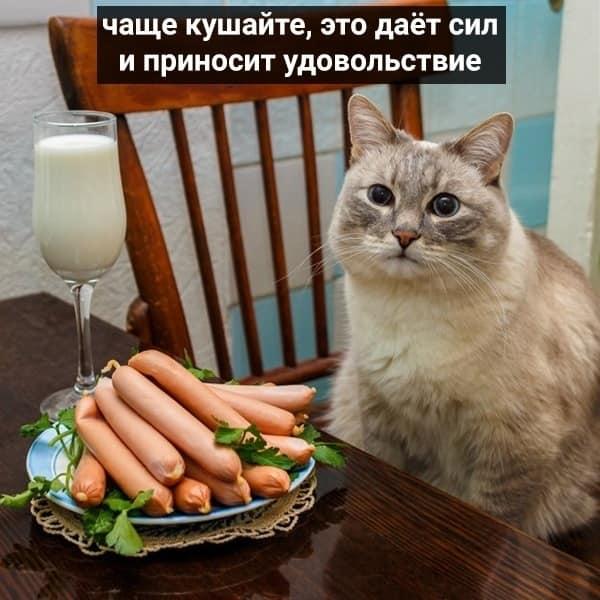 Коте A_0610