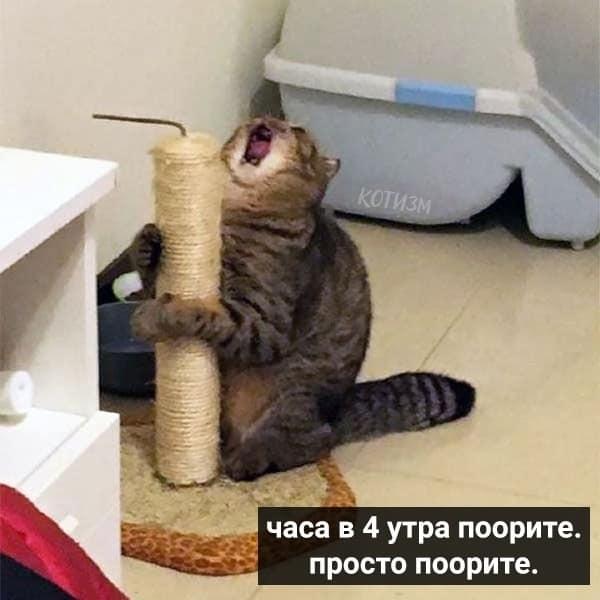 Коте A_0710