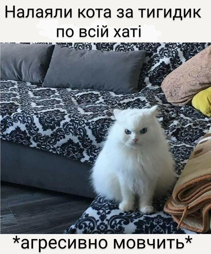 Коте A_0910