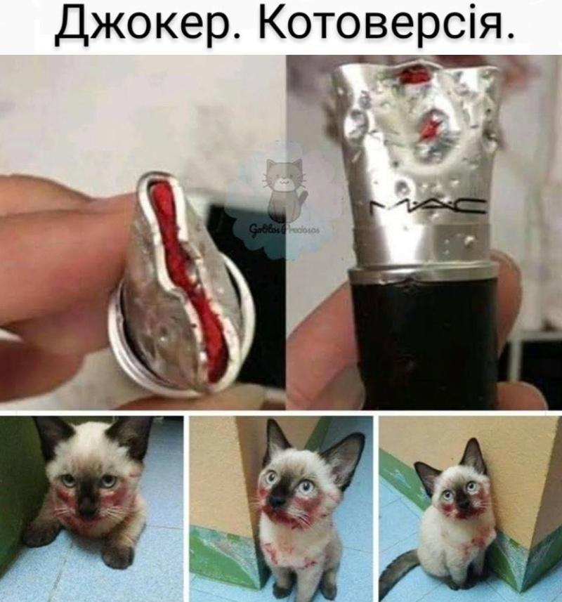 Коте A_0__010