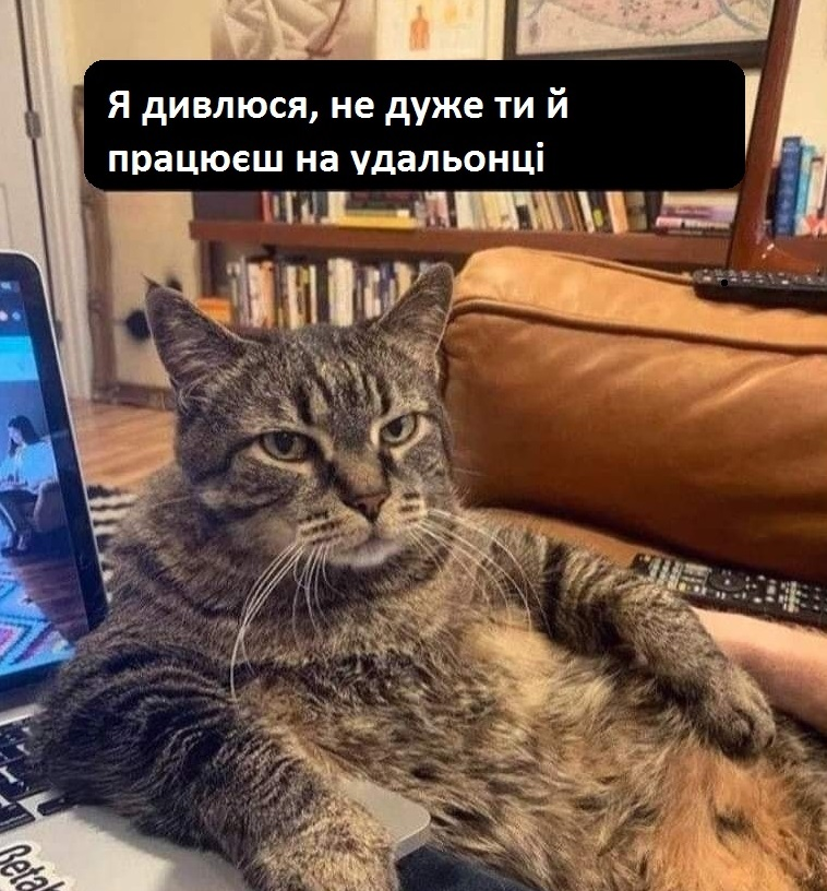 Коте A_1010