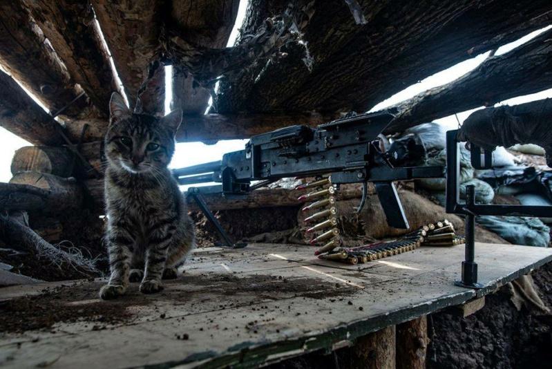 Коте A_11210