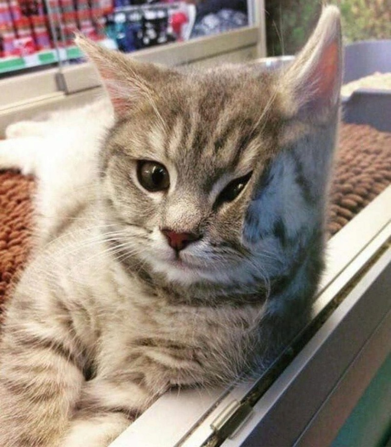 Коте A_112_11
